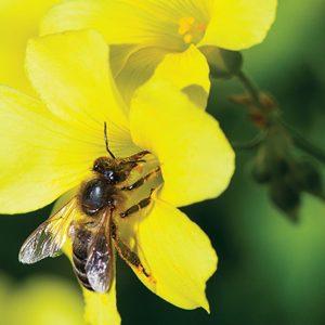 CineXjenza Bees Wb 1